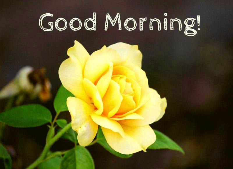 50 Beautiful Good Morning Images Hd 1080p Download